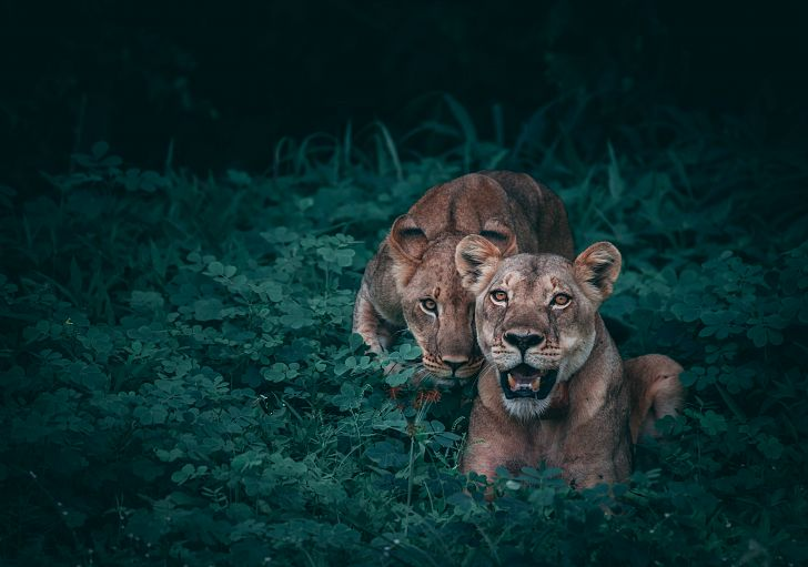 Travel For Wildlife is a blog that promotes responsible wildlife tourism and wildlife conservation. Photo by Geran de Klerk on Unsplash