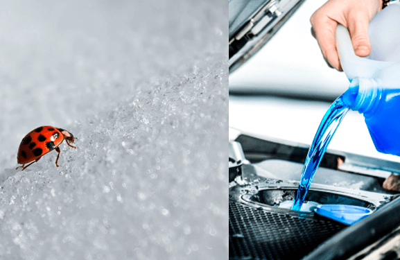 Collage image of a ladybug on snow versus blue antifreeze being poured into a car engine